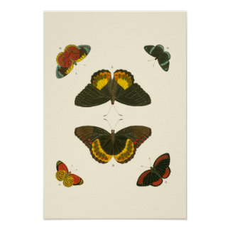 Poster Papillons lumineux par Pieter Cramer