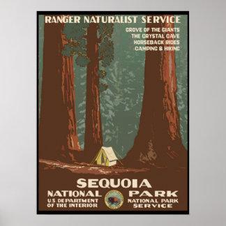 Poster Parc national de séquoia