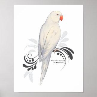 Poster Perroquet blanc de Ringneck d'Indien