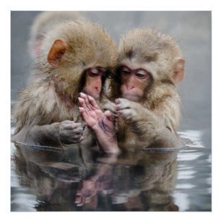 Poster Petits singes | Hot Springs, Japon