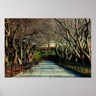 Poster Photo conservatrice de paysage de Central Park