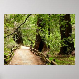 Poster Photographie de nature du chemin II en bois de