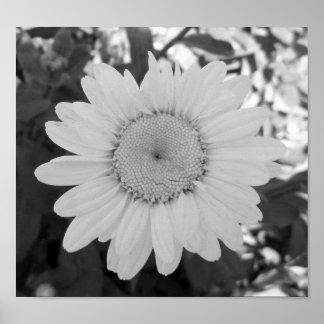 Poster Photographie noire et blanche de marguerite