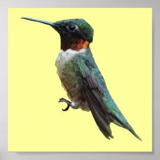 Poster Photographie Rubis-Throated d'oiseau de colibri