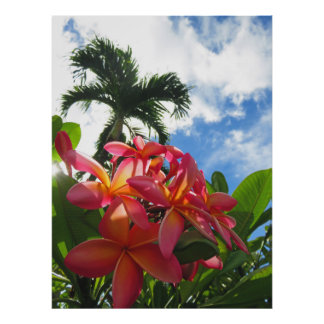 Poster Plumeria hawaïen