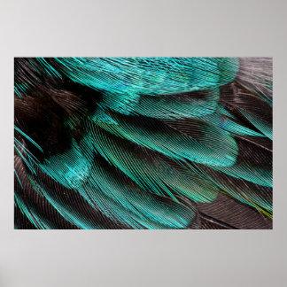 Poster Plumes bleues de couvert d'aile