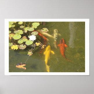 Poster Poissons de Koi dans un étang de lis