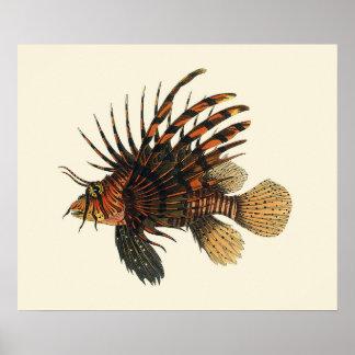 Poster Poissons vintages de Lionfish, animal marin de la