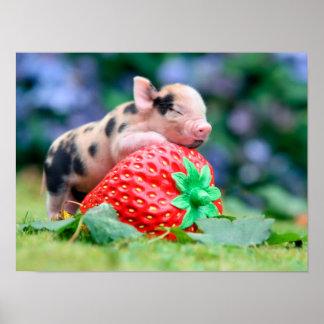Poster porc de fraise