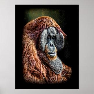 Poster Portrait d'orang-outan
