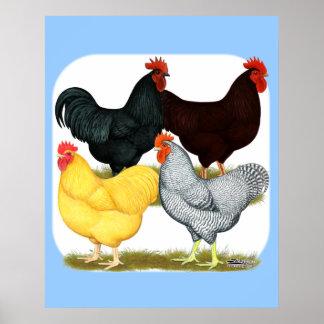 Poster Quartet lourd de poulet de coq