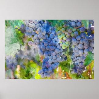Poster Raisins de vin rouge dans le vignoble