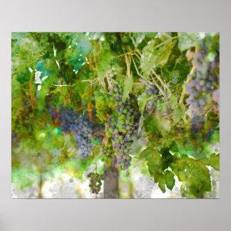 Poster Raisins de vin rouge sur la vigne