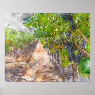 Poster Raisins sur la vigne dans Napa Valley la