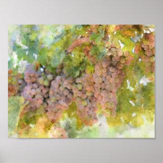 Poster Raisins sur la vigne prête à faire le vin