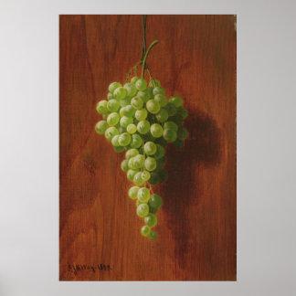 Poster Raisins verts