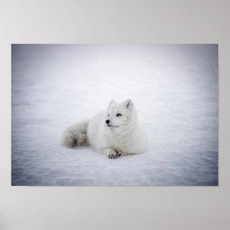 Poster Repos de Fox de neige