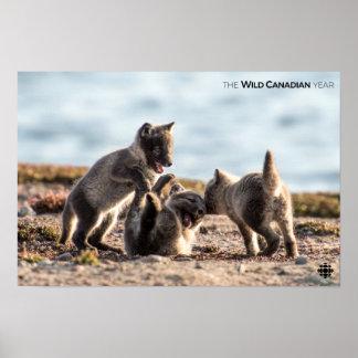 Poster Ressort - Fox arctique