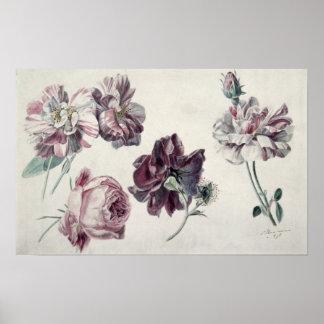 Poster Roses d'Alma-Tadema  