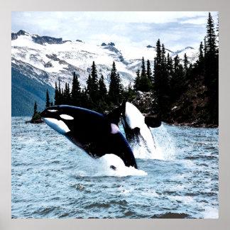 Poster Saut de l'orque
