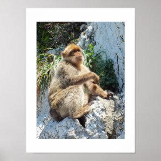 Poster Singe de macaque de Barbarie
