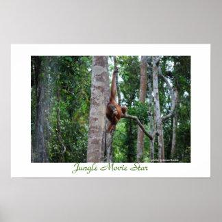 Poster Star de cinéma d'Aimal de jungle du Bornéo