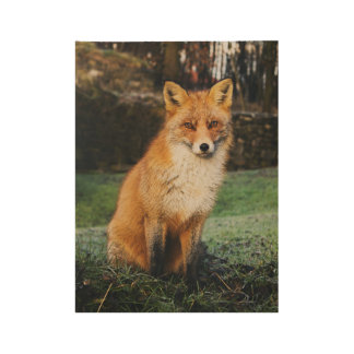 Poster Sur Bois Affiche en bois de Fox