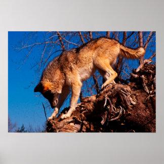 Poster Sur la chasse