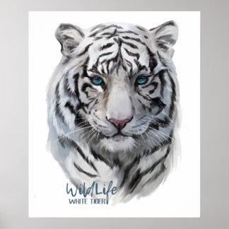 Poster Tigre blanc
