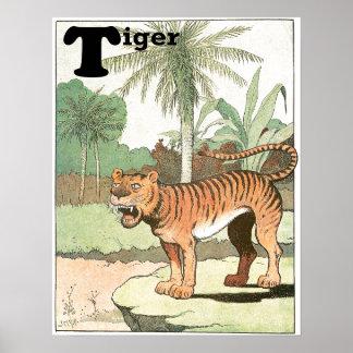Poster Tigre chez les animaux tropicaux d'un alphabet de