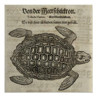Poster Tortue