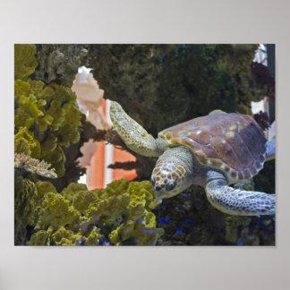 Poster Tortue de mer