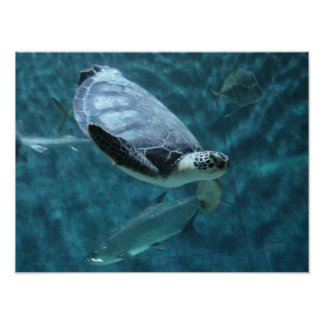 Poster Tortue de mer et affiche mignonnes de natation de