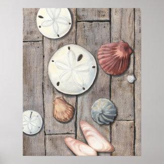 Poster Trésors de bord de la mer