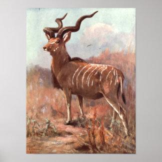 Poster Une plus grande antilope de Kudu par le cygne,