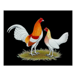 Poster Vieux coq nain anglais de jeu :  Pyle rouge