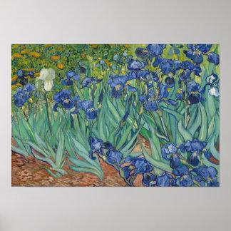 Poster Vincent van Gogh - iris