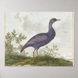 Poster Vogel, Pieter Withoos, 1664 - 1693