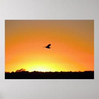 Poster Vol de héron à la photo de coucher du soleil