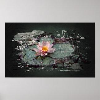 Poster Water Lily - la fleur de Lotus, rose de mer dans