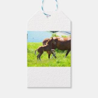 Poulain de bébé de poney de cheval mignon étiquettes-cadeau
