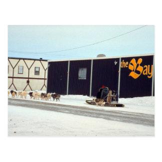 Poursuivez l'équipe à la baie, Churchill, Manitoba Carte Postale
