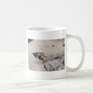 prendre un bain de soleil des crapauds mug