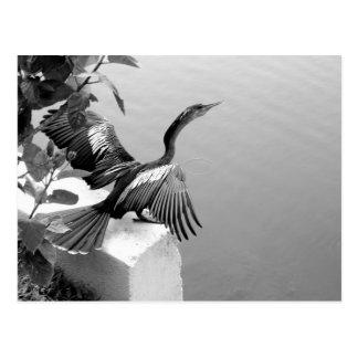 Prendre un bain de soleil d'oiseau carte postale
