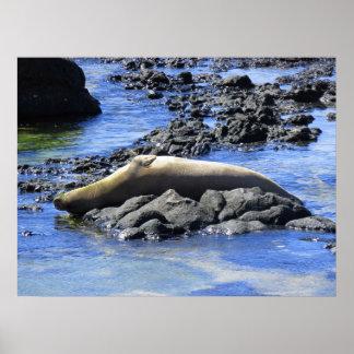 Prendre un bain de soleil hawaïen de joint de poster