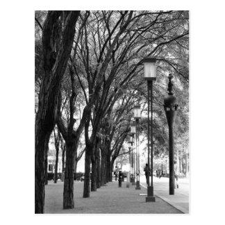 Promenade rayée par arbre de New York Carte Postale