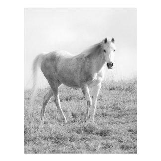 Prospectus 21,6 Cm X 24,94 Cm Cheval blanc monochrome