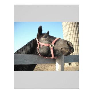 Prospectus 21,6 Cm X 24,94 Cm Cheval/ranch/grange