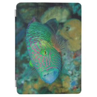 Protection iPad Air Plan rapproché des poissons de Wrasse