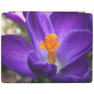 Protection iPad Crocus pourpre - fleur tôt de ressort